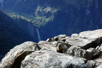 milford-sound-seal